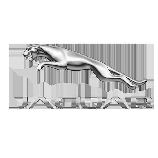 jaguar-morocco